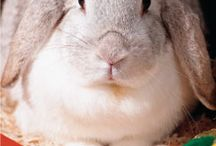 Bunnies.. / by Chasey Tabit