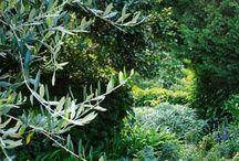 Will Dangar Gardens