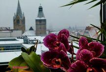 nice Flower by Holger