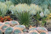 Desertic and succulent garden / Landscaping