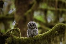 Cute animals and nature / by Whitney Tabler