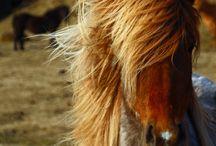Horses around the world