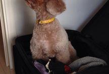 Lychee / Tokyo Japan 我が社のアイドル犬ライチくん。暖かいところが大好き。