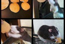 Rat Food & Treats