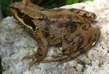 Kikkers,padden,salamanders en zo