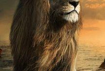 levíkovo, tigríkovo, zvieratkovo