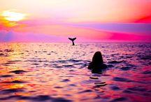 Dolphins & Mermaids
