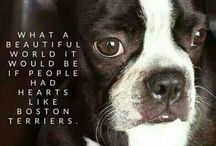 Eläimet ja lemmikit