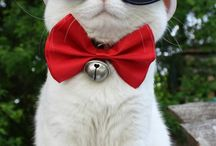 Cats <3 / All about funny looking / adorable / cute cats