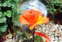 Deluxe Forever roses örök rózsák üvegbúrában,örök rózsaboxok,örök rózsa kerámia boxban