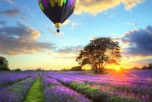 Up Up and Away / Hot Air Balloons / by Stacie Daquino
