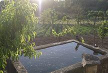 Horta Galega / Productos das hortas
