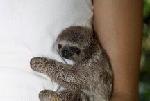 Animals:-)
