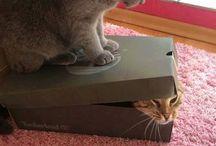 gatoslevados