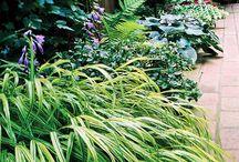 Lawn & Garden / by Liz Hunker
