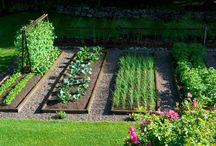 zeleninova zahrada