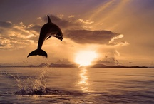 Ocean's Best
