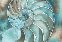 Nautilus schelp
