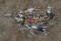 Examples of Ecocide / Signs of environmental destruction and degradation.  Reasons to resist.