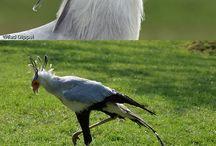 aves..