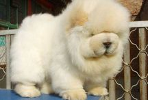 Fluffy and cute