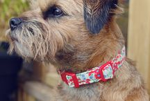 Dog  collars / Handmade deluxe dog collars for a full range see www.maisiespetboutique.co.uk