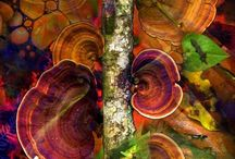fungi perfecti / by Julie Floyd