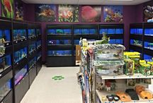 Fish rooms / Retailers fish and reptile systems