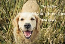 http://blog.petpromart.com/ / Follow our Blog to learn more about your family pet!