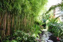 bambu garden