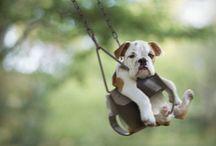 Animals & other Cuteness
