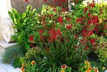 Garden (Landscaping)