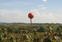 El color en las viñas Porcellànic / El color aplicado a las viñas Porcellànic. Está demostrado que la radiación de color aplicada a las viñas, influye en el sabor del vino.  Vinos ecológicos, vinos sin sulfitos, vinos naturales, vinos elaborados por el sistema de permacultura, Porcellànic xarello, xarello sur lie, vi dolç natural Porcellanic, cava porcellanic.