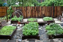 make | garden / by xiomiandrea
