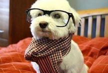 Søde hunde