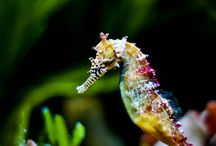 Sea Horses  :) / by Carrie M