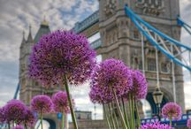 Londres & Royaume-Uni