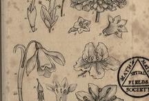 flores,plantas y animales