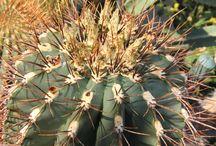 Cactus de (quase) todas as variedades do mundo / quase todas as variedades do mundo