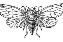 unusual insect tattoo inspire