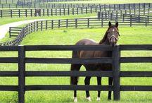 horsecamp fence