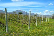 Naoussa Wine Estates / Οινοποιεία της ζώνης ΠΟΠ Νάουσα   PDO Naoussa zone wine estates