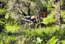 Italien Reiseideen / Wein, Olivenöl und gutes Brot. Reisen in Italien. Vom Gardasee bis nach Sizilien.