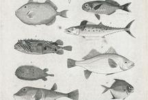 Biological Illustrations / I Love  ;-)