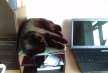 Our Cat Jack !!