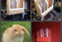 bunny home