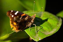 Butterflies of Oleander Acres RV Resort