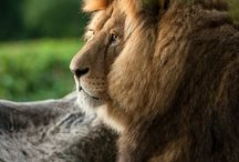 animales / by estefaniabotero