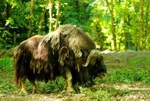 Zoo de Mulhouse / L'actualité en images sur le Zoo de Mulhouse (France)