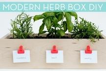 Idées, Wan't To do : jardin, fleurs,  plantes d interieurs